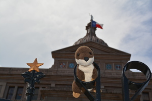 "Otter just ""hanging out"" outside the capitol."