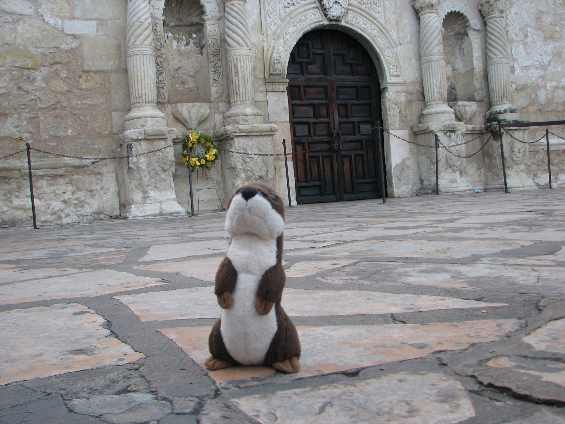 Otter at the Alamo